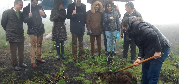 A restauración forestal de Cualedro tras o lume estará rematada esta primavera