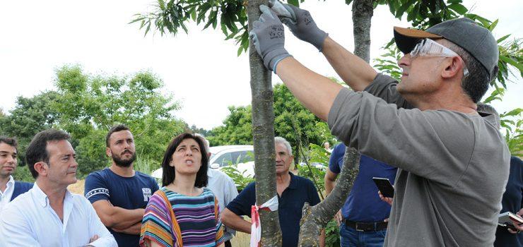 Medio Rural reforza a loita biolóxica contra o chancro do castiñeiro