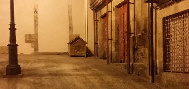 Ourense controlará as colonias de gatos abandonados