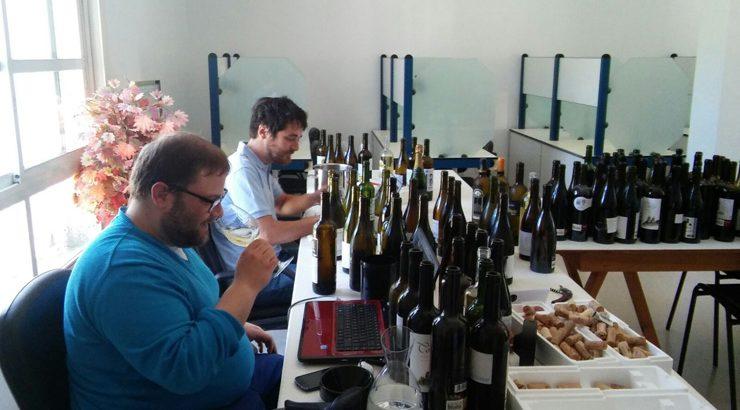 Os viños novos de Valdeorras, os máis valorados de España na Guía Peñín
