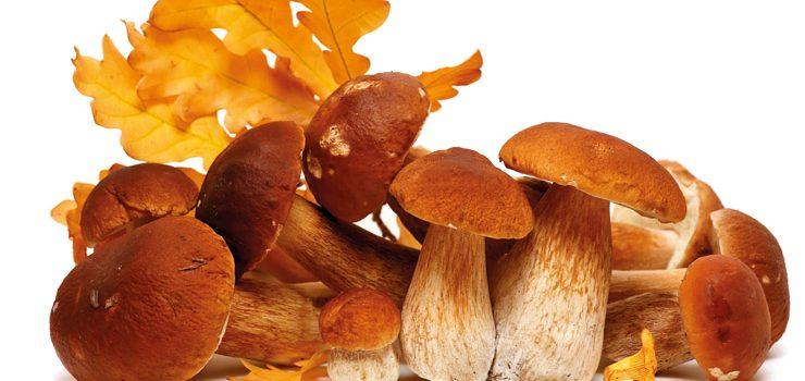 Cita cos produtos de outono en Allariz