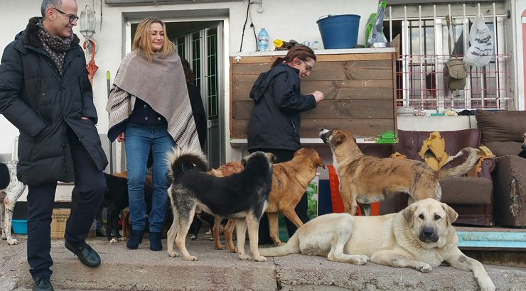 60.000 euros en melloras no albergue de animais