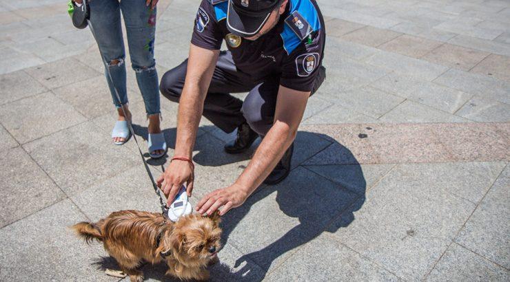 O Concello de Verín pon en marcha unha campaña para a identificación de cans por microchip