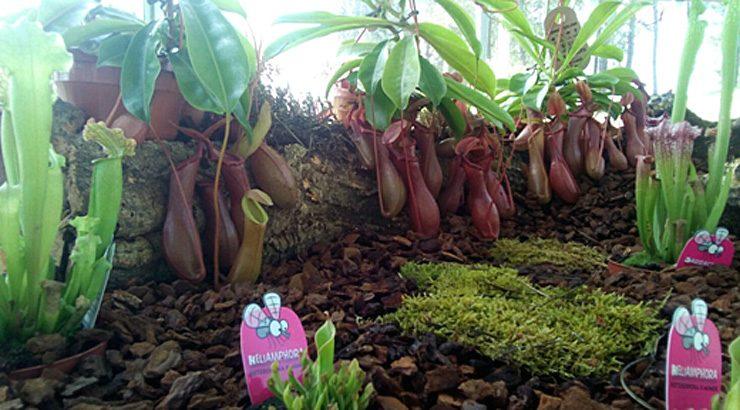 Plantas carnívoras no Botánico de Montealegre
