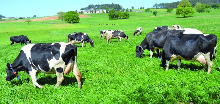 """Consolídase no mercado o selo lácteo """"Galega 100%"""""""