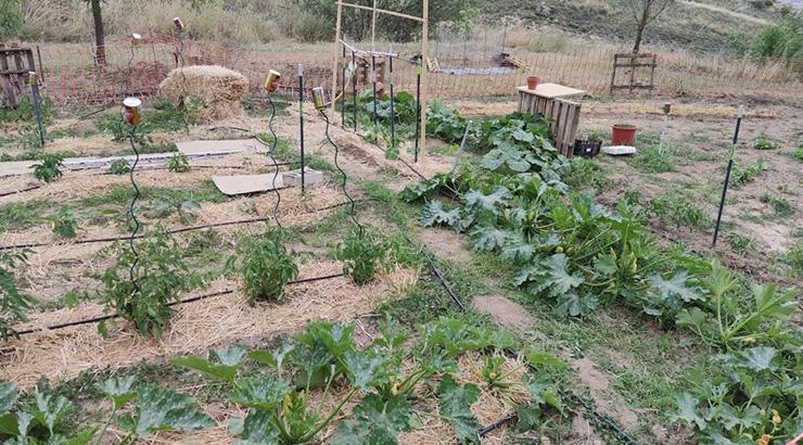 Catarse: revalorización da vida rural
