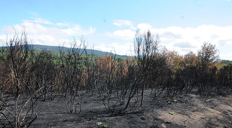 Incendios forestales atacan la provincia de Ourense