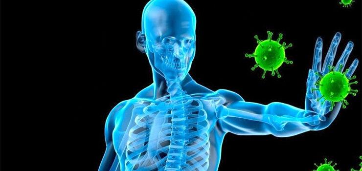 A alimentación cura o sistema inmunitario